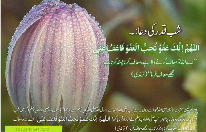 laila tui qadar quotes wishes pics photos images wallpapers sms status